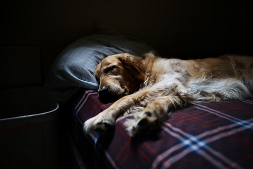 chien cycle sommeil