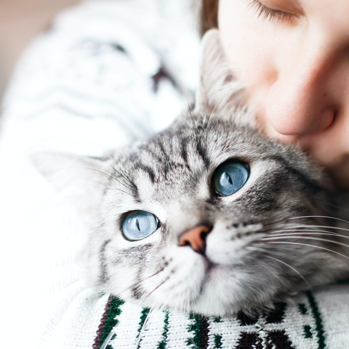 pourquoi prendre un chat