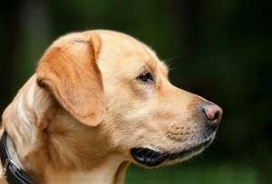 comportementaliste chien